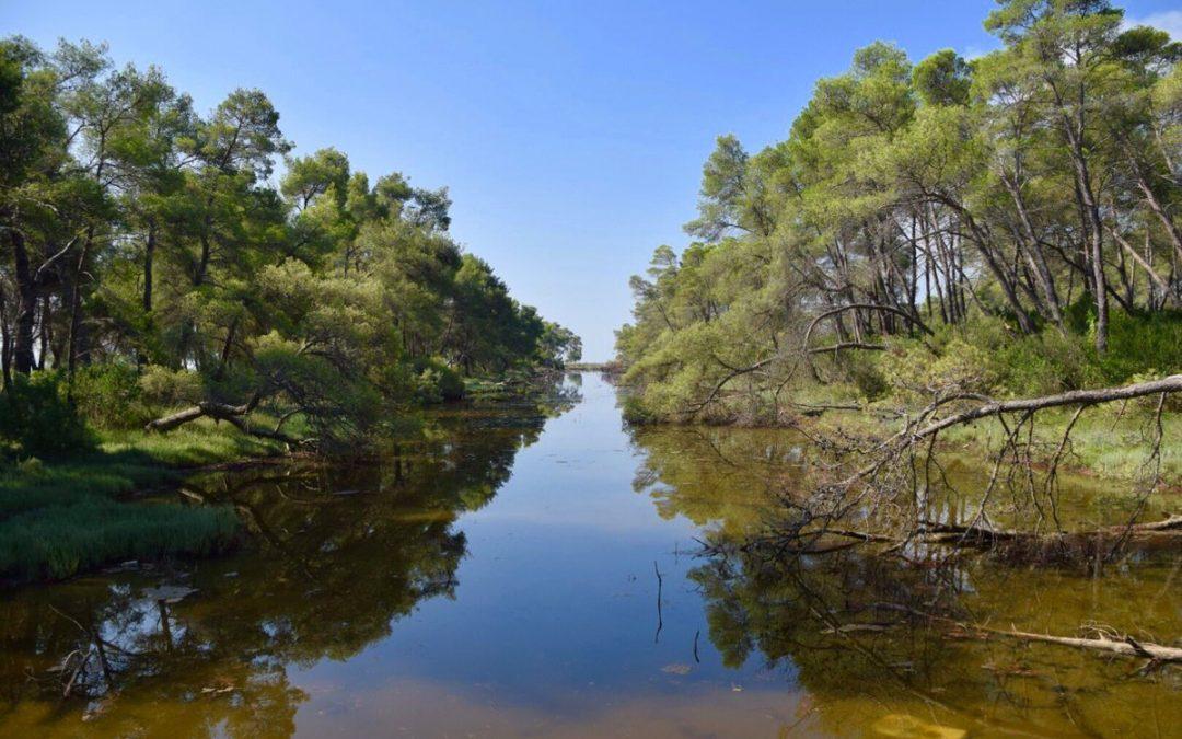 Pyllëzimi si zgjidhje natyrore për klimën dhe mbrojtjen e biodiversitetit në Parkun Kombëtar Divjakë-Karavasta