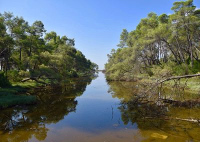 Forestation as a natural solution for climate and biodiversity protection in Divjaka-Karavasta National Park